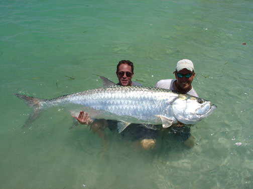 Home of sports tarpon fish gallery for Tarpon fish pictures