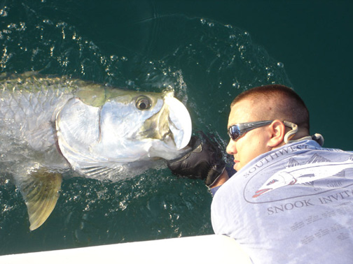 tarpon fishing florida